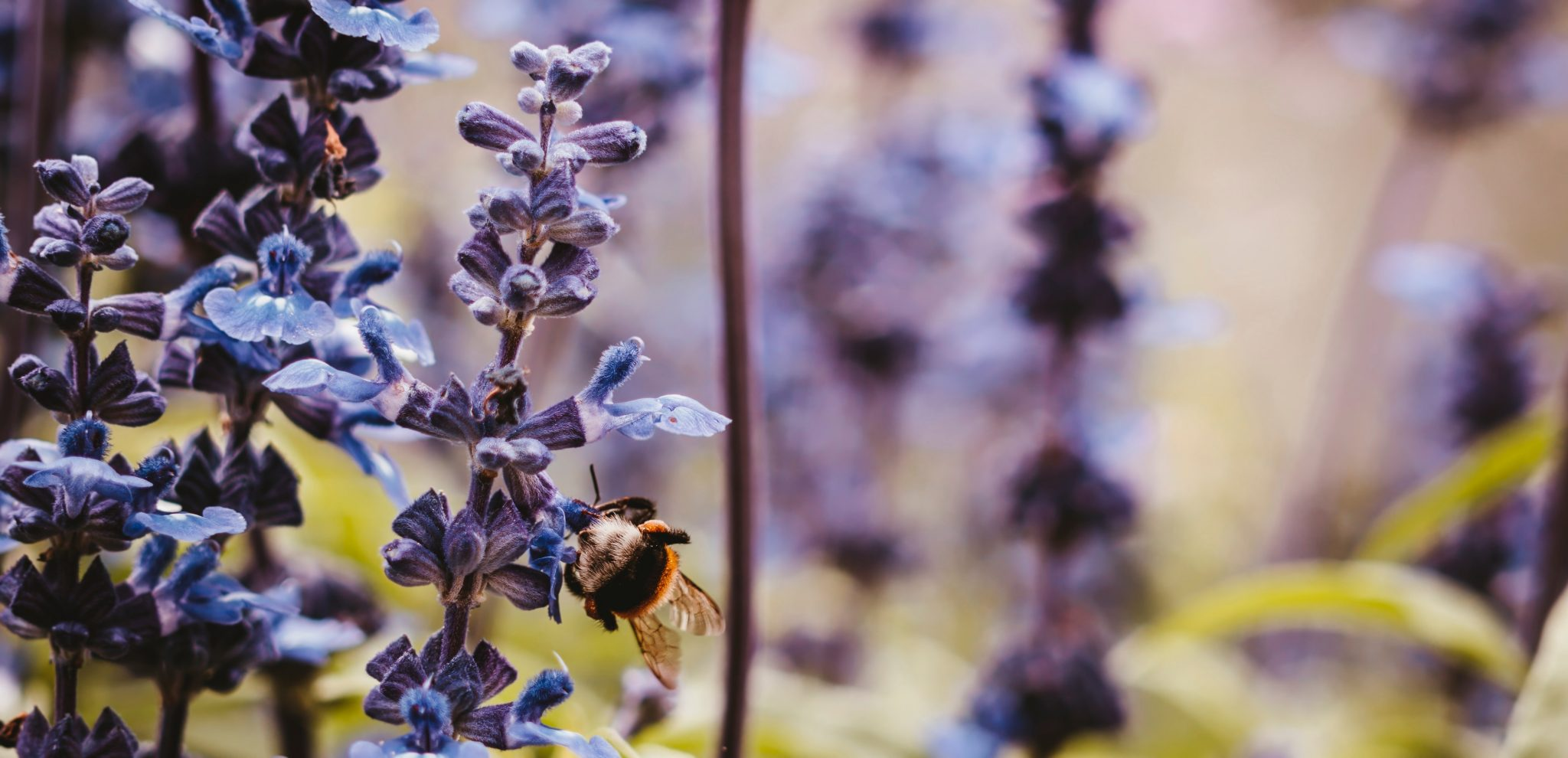 How You Can Help Save the Humble Bumblebee